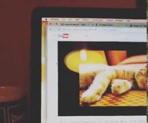Muzyka relaksacyjna dla kotów
