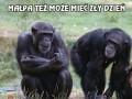 Małpa też może mieć zły dzień