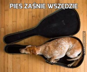 Pies zaśnie wszędzie