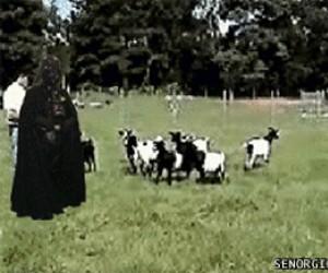 Vader kontra kozy