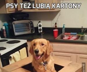 Psy też lubią kartony