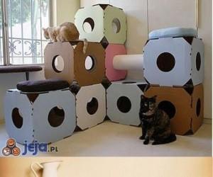 Kocie meble