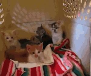 Goryl i kociaki