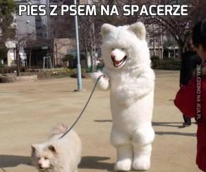 Pies z psem na spacerze