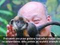 Dotarłeś do krańca internetów, małpka pozdrawia!