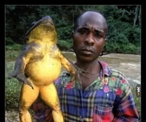 Największa żaba świata