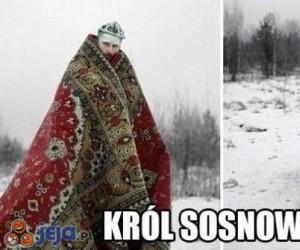 Król Sosnowca