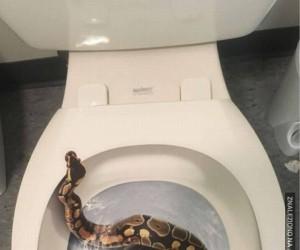 O nie, węże w ki.... uf