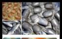 Zdjęcia artystycznie połączone przez sztuczną inteligencję
