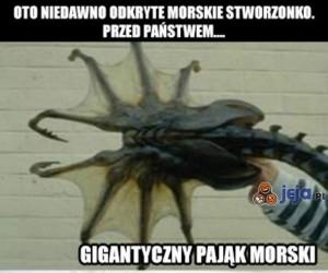 Wielki pająk morski