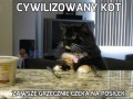 Cywilizowany kot