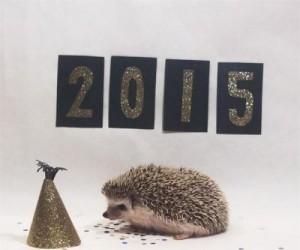 Całoroczny kalendarz z jeżykiem