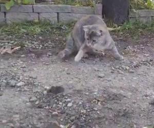 Nieustraszony łowca myszy