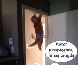 Koteł, miarka się przebrała!