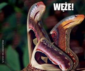 Węże!