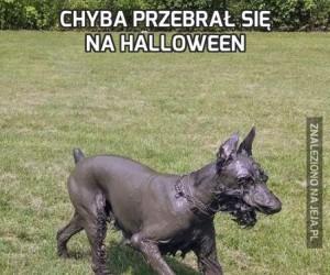 Chyba przebrał się na Halloween