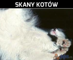Skany kotów