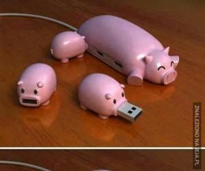 Małe świnki i mamusia w wersji USB