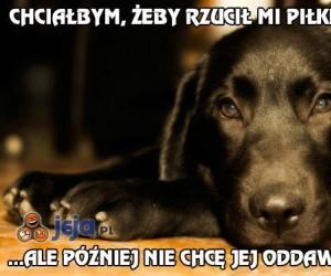 Problemy psów pierwszego świata