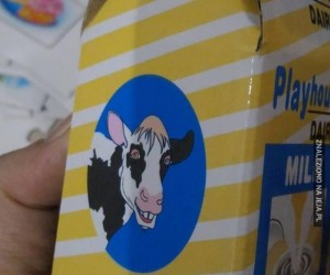 Co ta krowa?