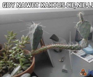 Gdy nawet kaktus Cię nie lubi