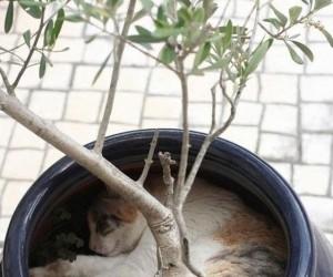 Koty lubią leżeć w dziwnych miejscach