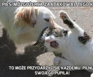 Pies-mózgożerca zaatakował tego kota
