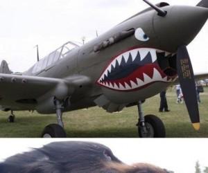 Aerodynamiczny pies