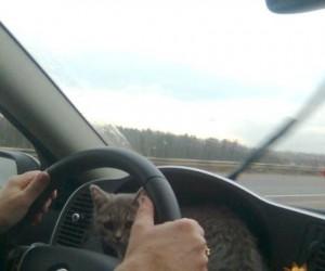 Ekstremalna jazda autostradą
