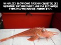 Nowa najbrzydsza ryba świata