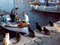 Koty rybaków