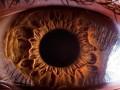 Ludzkie oko w powiększeniu