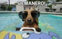 Siemanero!
