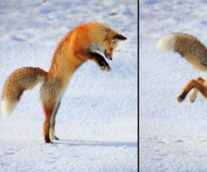 No, to hop!
