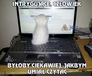 Mój kot uwielbia przeglądać internet