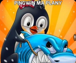 Pingwin ma plany