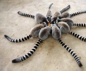 Lemury przy obiedzie