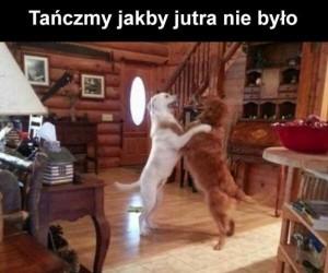 Tańczymy labrada, labrada, labrada