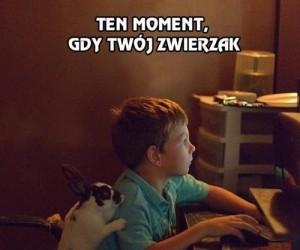 Ten moment, gdy Twój zwierzak jest uzależniony od internetu tak jak Ty