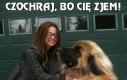 Pies o rozmiarach XXL