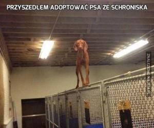 Przyszedłem adoptować psa ze schroniska