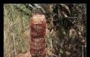 Istnieje gatunek kaktusa