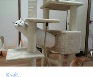 Co ten koteł?