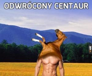 Odwrócony centaur