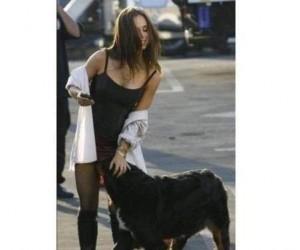 Czyj to pies?