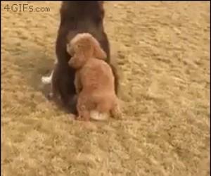 Jak jest ochota, to i pies powietrze wyłomota