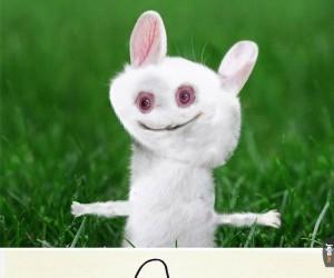 Nigdy nie wiedziałem takiego królika