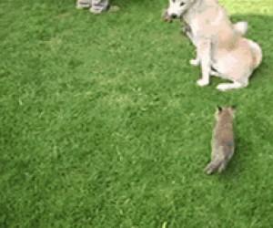 Dwa liski i ich przyrodnia mama