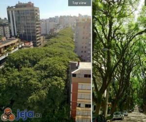 Trochę zieleni w miejskiej dżungli