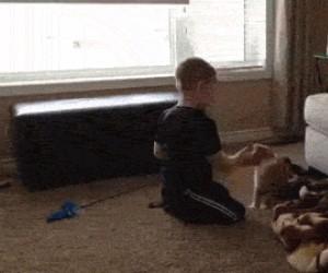 Lepiej nie drażnić kota